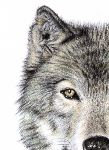 Arts And Dogs - Wolf Auge