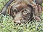 Arts And Dogs - Labrador Welpe